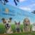 Broward County Animal Care & Adoption Center