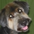 Sweetie Pooch Pet Parlor Inc