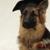 Great Companion Dog Training