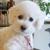 Edmond Pet Care