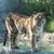 Columbus Zoo & Aquarium/Zoombezi Bay/Safari Golf Course