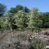 Brookview Park
