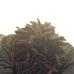 Best African Braiding