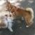 Royal Rover Pet Care