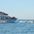 Newport Landing Whale Watching & Specialty Cruises