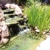 Complete Pond Care