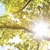 Economy Tree Service LLC
