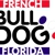 French Bulldog Florida  Le Pup Joli.