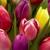 Parmentier's Ninth St Floral