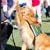 Ultra Obedience Dog Training