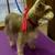 LRC Small Dog Grooming Salon & More