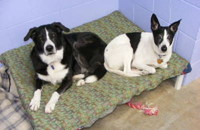You Work, I'll Play Dog Daycare and Training - Asheville, NC