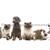 Brandywine Hospital For Pets