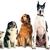 Dogwatch SETX Hidden Fence