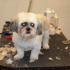 Butterfield Dog Grooming