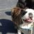 NoVa Dog Services