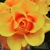 Flowers By Special Arrangement