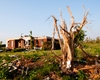 Tree removal services can cut down trees damaged by storms and haul them away for you.