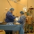 Cascade Veterinary Specialists