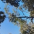 Green Leaf Tree SVC