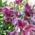 Aaron's Flowers