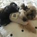 Woof Woof Puppies & Boutique