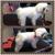 Ruff House Pet Salons