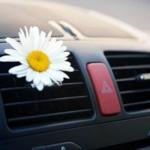 car-flower-600-400