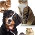 Brattleboro Veterinary Clinic