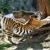 Detroit Zoological Society
