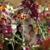 Ten Pennies Florist Inc