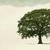 D Ryan Tree & Landscape Service