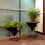 Interior Plantworks Inc.