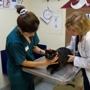 VCA Tampa Bay Animal Hospital