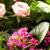 Vivian's Flowers & Gifts