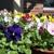 Tewksbury Florist & Greenery