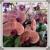 Natural Orchids Boutique