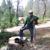 Kuttler Tree Service