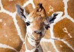 Zoo Babies Across America