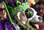 40 Howl'oween Parade Doggies