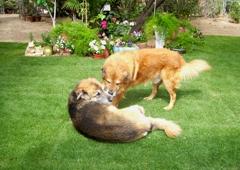 Home Sweet Home Pet Sitting and Dog Walking - Tucson, AZ