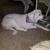 Amy's Dog Grooming