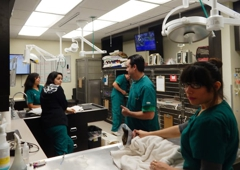 Veterinary Medical Center - Studio City, CA