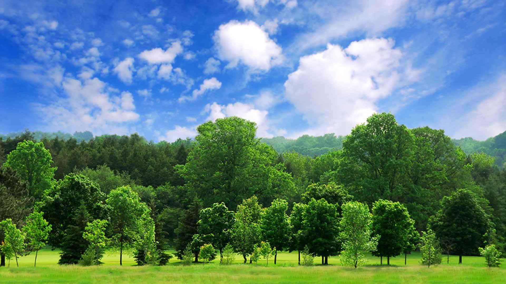 Beaver Tree Service Montgomery 3710 White Oak St Montgomery Tx
