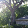 Mercer Tree Service