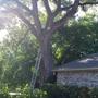 Mercer Tree Service