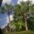 Polynesian Isles Resort