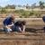 Agave Farms