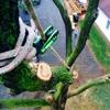 Sussex Tree Inc.