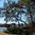 Palmetto Tree Service
